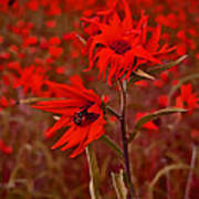 Red Red Wild Flowers Art Print