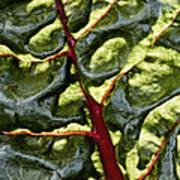 Red River Through Green Hills Art Print