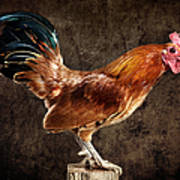 Red Rooster On Fence Post Art Print