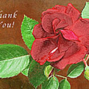 Red Rose Autumn Texture Thank-you  Art Print