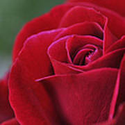 Red Rose Close 1 Art Print