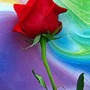 Red Rose Delight Art Print