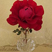 red rose III Art Print