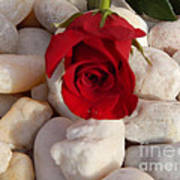 Red Rose On River Rocks Art Print