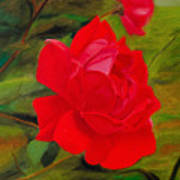 Red Rose With Bud Art Print