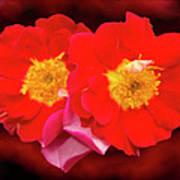 Red Roses Heart Art Print