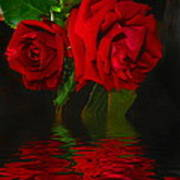 Red Roses Reflected Art Print