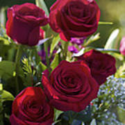 Red Roses The Language Of Love Art Print