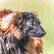 Red-ruffed Lemur Art Print