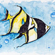 Red Sea Banner Fish  Art Print