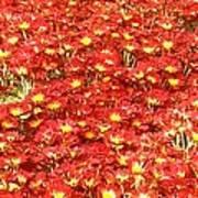 Red Sea of flowers Art Print