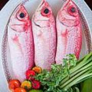 Red Snappers Art Print