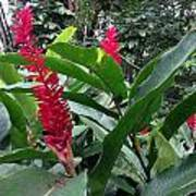 Red Spikes In St Lucia Art Print
