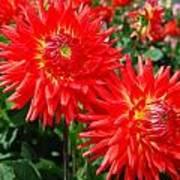 Red Spikey Flowers Art Print