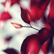 Red Spring Art Print