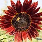 Red Sunflower And Bee Art Print by Kerri Mortenson