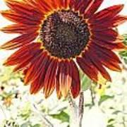Red Sunflower Glow Art Print