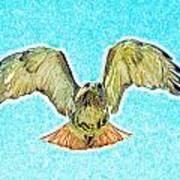 Red Tail Hawk Art Print