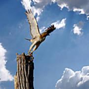 Red-tailed Hawk Perch Series 5 Art Print