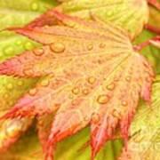 Red Tip Leaf Art Print