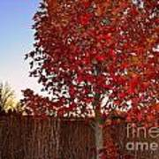 Red Tree At Sunset Art Print