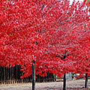 Red Tree Line Art Print