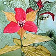 Red Trillium Art Print