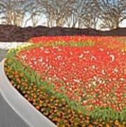 Red Tulip Garden Art Print