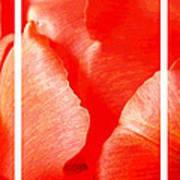Red Tulip Up Close Trio Sample Art Print