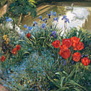 Red Tulips And Geese  Art Print
