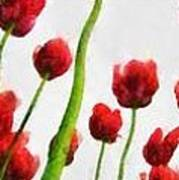 Red Tulips From The Bottom Up Triptych Art Print