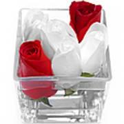 Red Versus White Roses Art Print