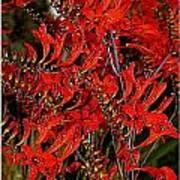 Red Devils Tongue Vine Vertical Art Print