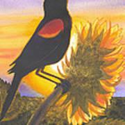 Red-wing Blackbird Art Print