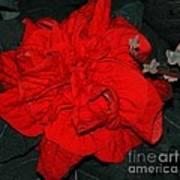 Red Winter Rose Art Print