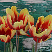 Red Yellow Tulips Art Print