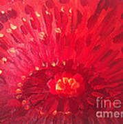 Red Zinnia Art Print