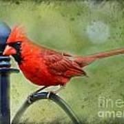 Redbird Alert Art Print