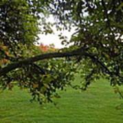 Redbud Tree In Autumn Art Print