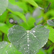 Redbud Water Droplets Art Print
