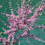 Redbuds Over San Antonio River Art Print