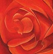 Redrose14-1 Art Print by William Killen