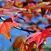 Reds Of Autumn Art Print