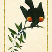 Redwing Blackbird Vertical Art Print