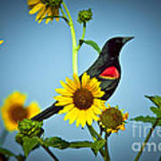 Redwing In Sunflowers Art Print