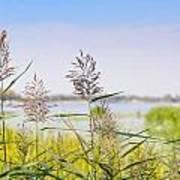 Reed Flowers Art Print