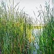 Reeds And River Art Print
