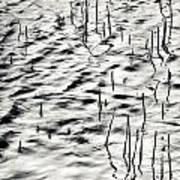 Reeds In Ripples Art Print