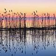 Reeds Reflected In Water At Dusk Ile Art Print