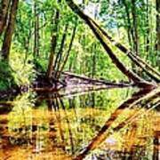 Reflected Forests Art Print